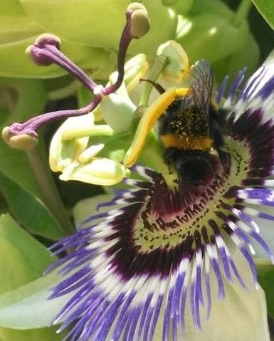 insectos primavera